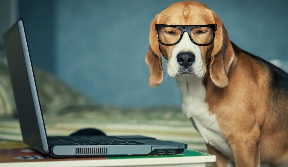 anjing pintar